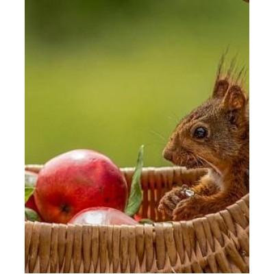 """Саженец яблони  """"Эрли мак"""""""