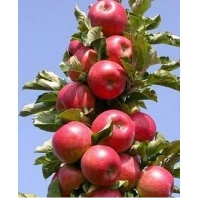 """Саженец яблони колоновидной """"Джин"""""""